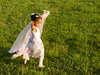 Dance_poses_children_008